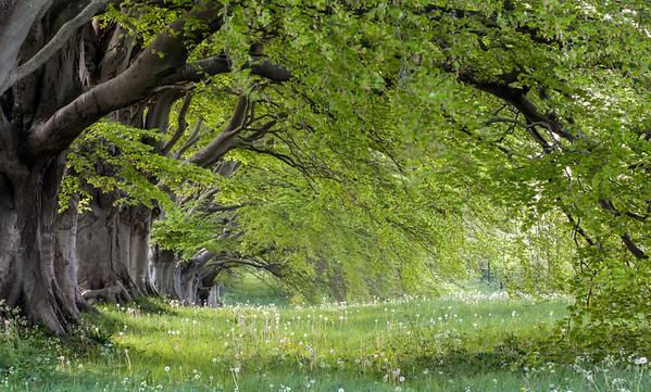 Kingston Lacy Trees