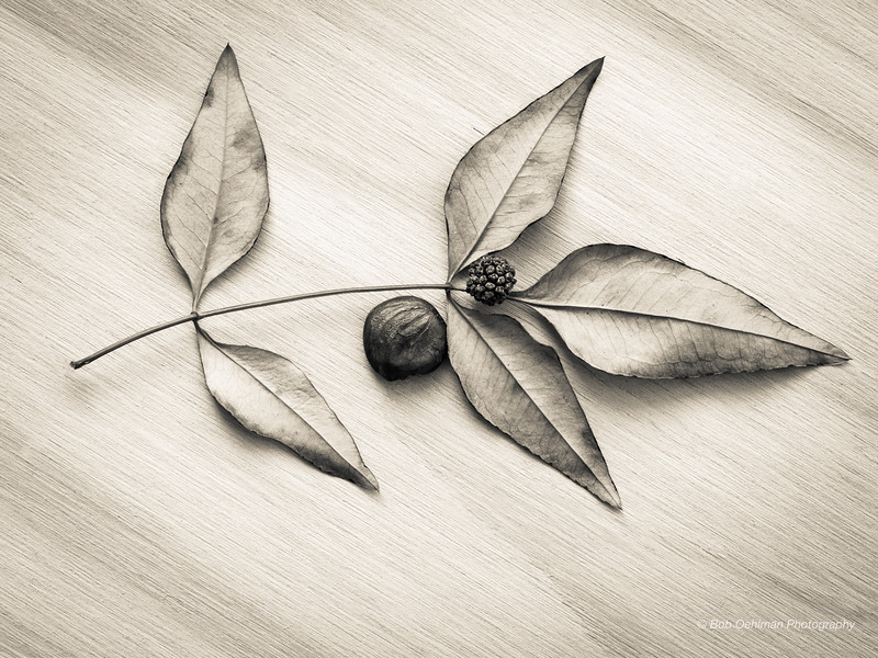 Five Leaves and Two Seeds