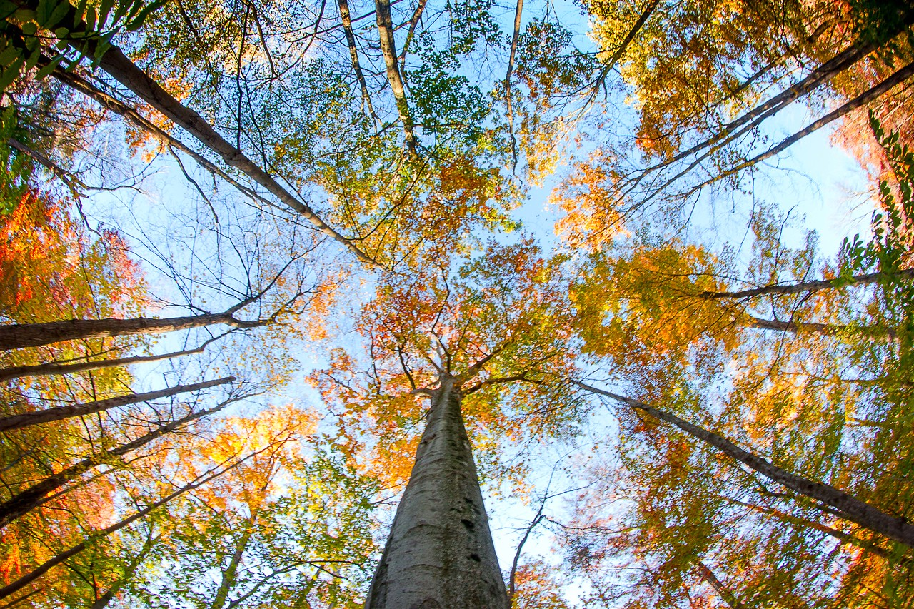 Looking up in Warren Woods