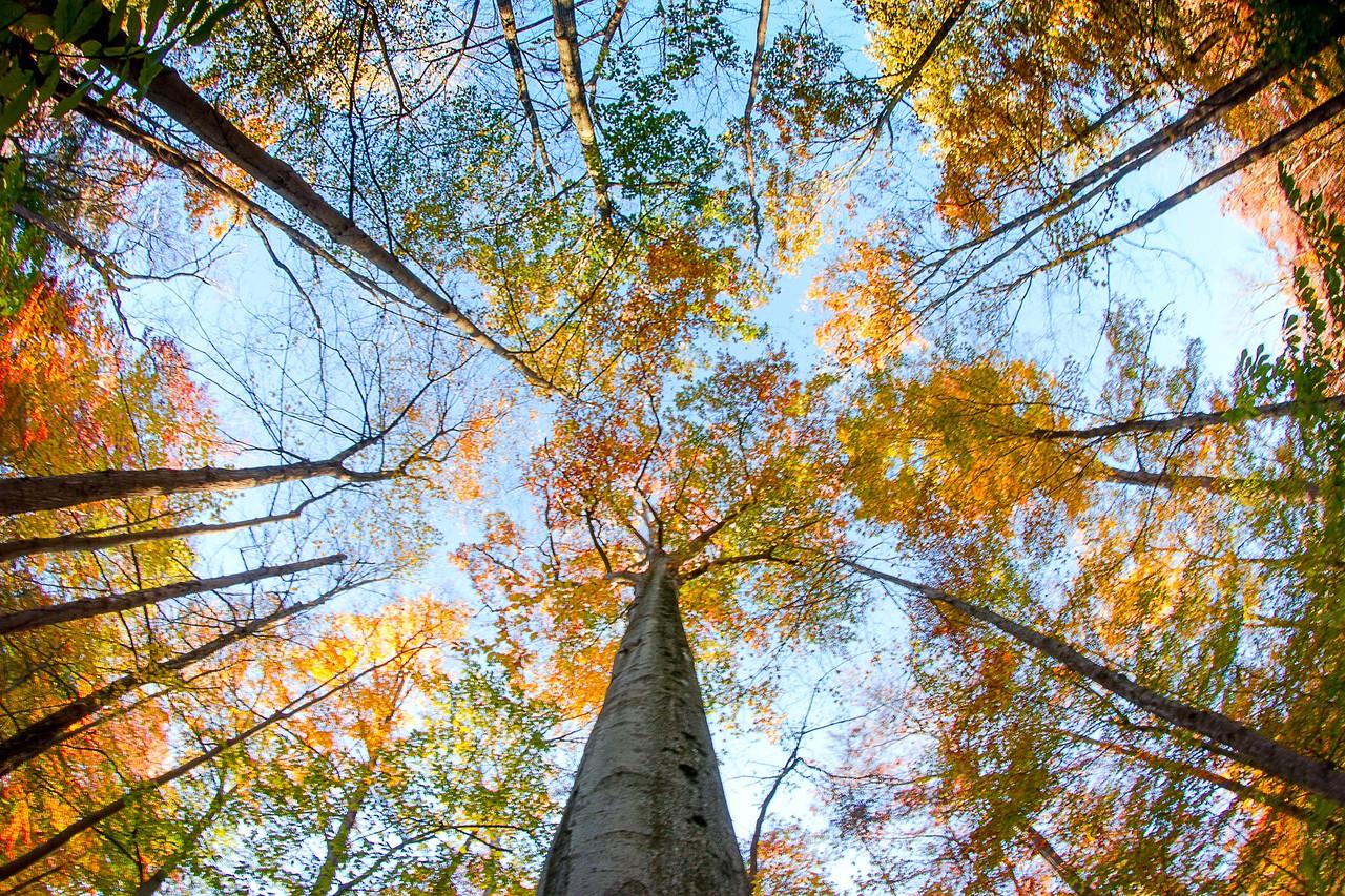 Looking up in Warren Woods