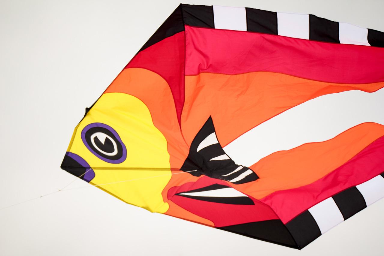 #Kite #Festival