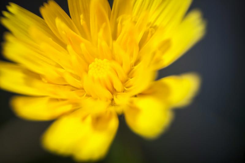 Wildflower, Pacific Rim National Park