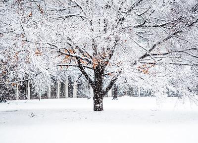 White snow