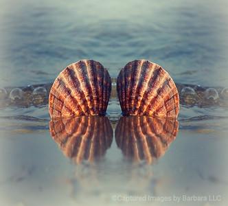 Two Shells Reflecting