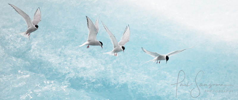 Terns in a Queue