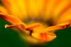 Flower Essence #1