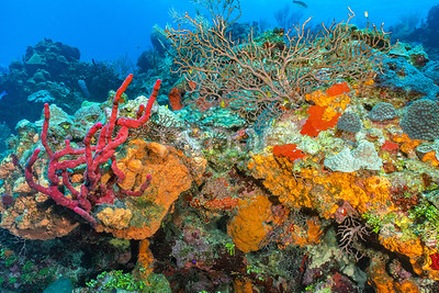 Bright colors of the reef