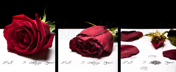 I Love You... Tryptic