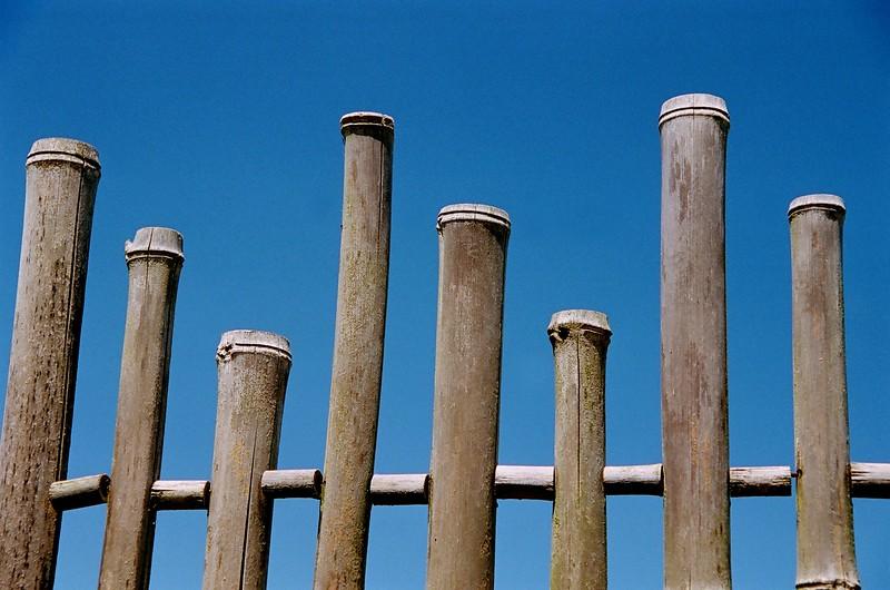 Bamboo Fence.