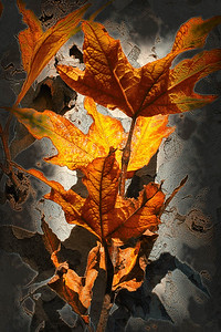 Listening Leaves