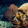 Underwater Still Life