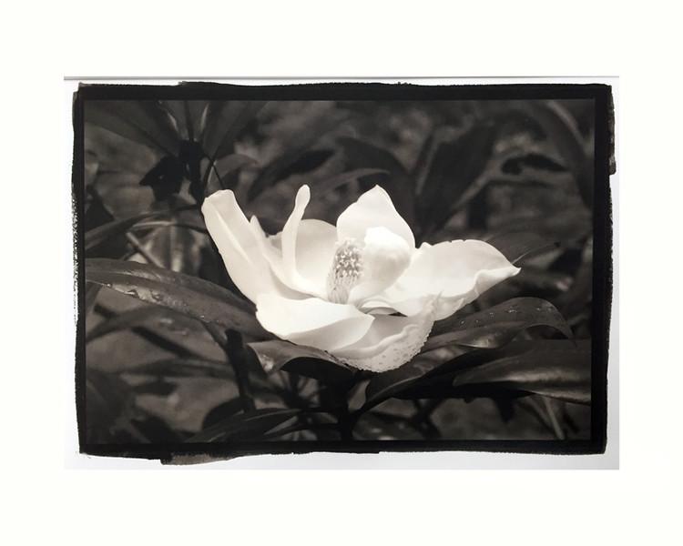 "Magnolia 7, mat/frame 14x16"""