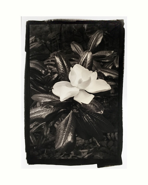 "Magnolia 3, mat/frame 14x15"""