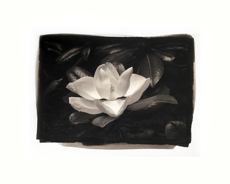 "Magnolia 6, mat/frame 14x16"""