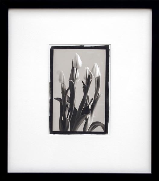 Tulips, platinum/palladium print