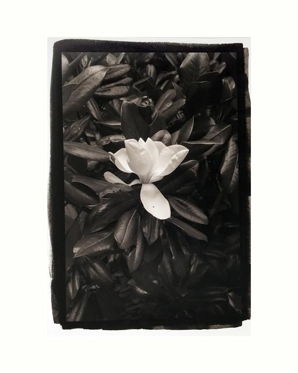 "Magnolia 4, mat/frame 14x16"""