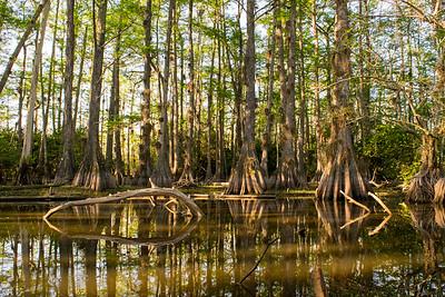 Gator Hook Big Cypress Preserve