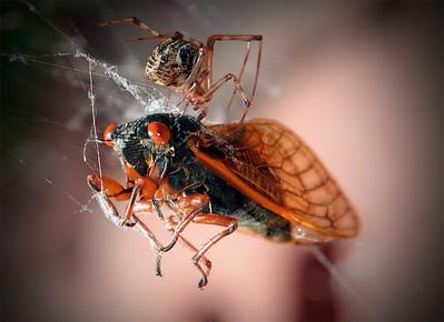 """Death of a Cicada"" © end2endphotography 2011"