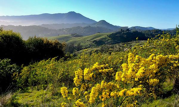 Mt  Tam Ring Mountain -173520