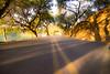 Carneros highway-1150