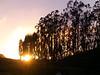 Nicasio at Sunset-