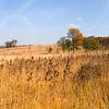 Prairie panorama, Shaw Nature Reserve