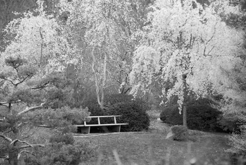 Japanese Garden, Mo. Botanical Garden.