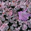 Fallen flowers, Mo. Botanical Garden.