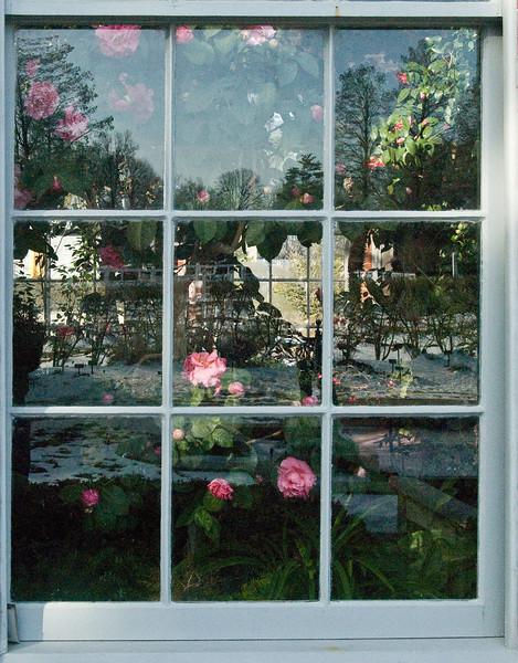 Linnean House window, Mo. Botanical Garden.