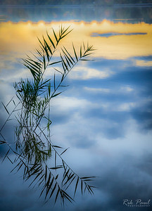 Reflections at twilight