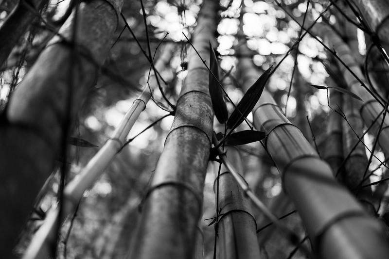 Bamboo, Ridout Garden, Singapore.