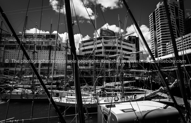 forest of masts and traditional boats and their rigging between Hobson and Pricess Wharves