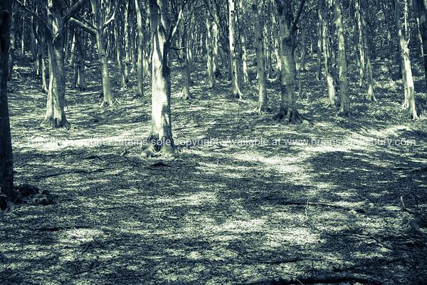 Forest filtered light.