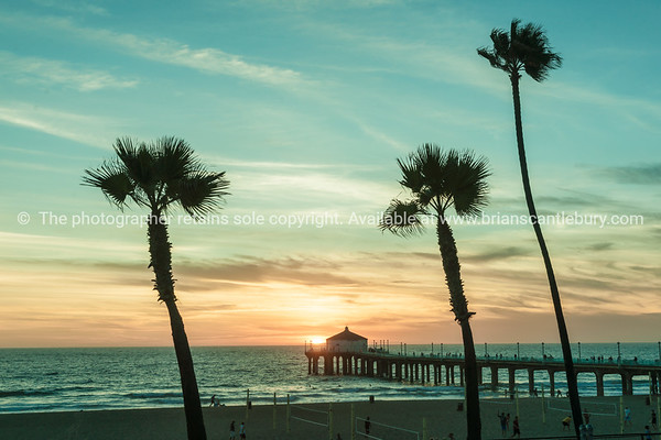 Tropical palms along Californian beaches