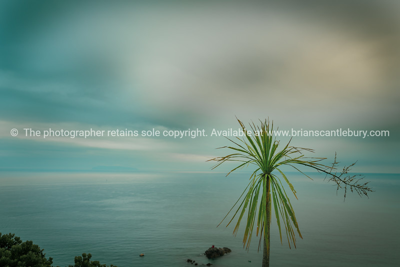 Sea and horizon and tatty cabbage tree.