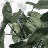 Mid century style image paulonia leaves