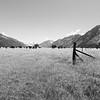 Monochrome flat farmland between Soutern Alps mountains