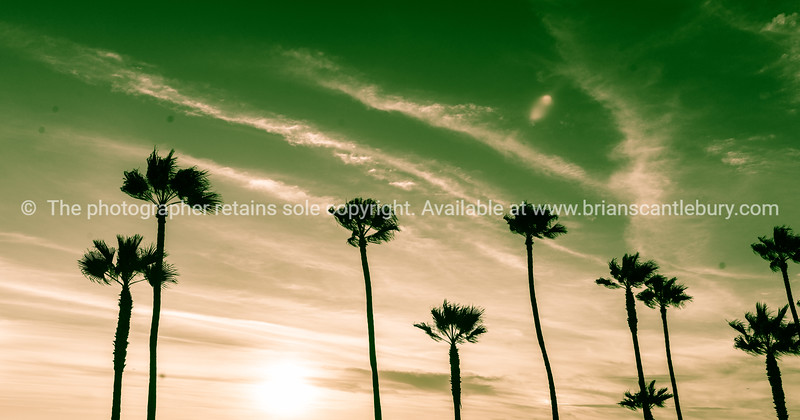 Tropical palms along Californian beaches. (5 of 43)-2