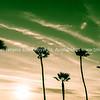 Tropical palms along Californian beaches. (5 of 43)-2