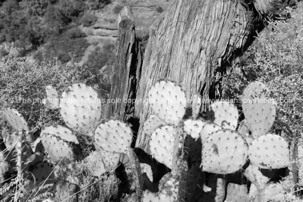 Arizona. (510 of 1010)