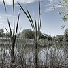 Picturesque Patterson Ponds and surrounding trees and vegetation during spring