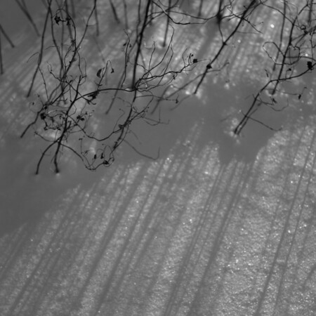 Twigs and shadows