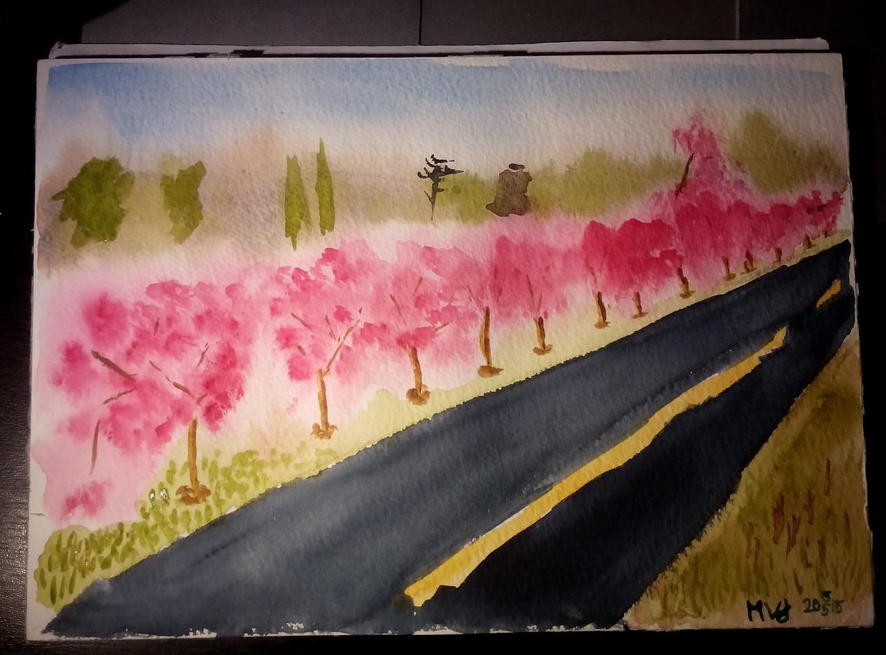 Cherry trees, Staten island