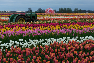 Wooden Dutch Tulip Farm