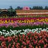 Wooden Dutch Tulip Farm