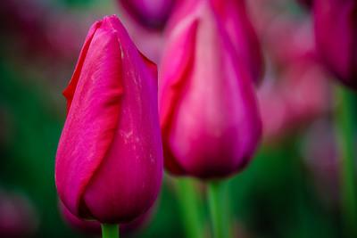 Captivating Pink
