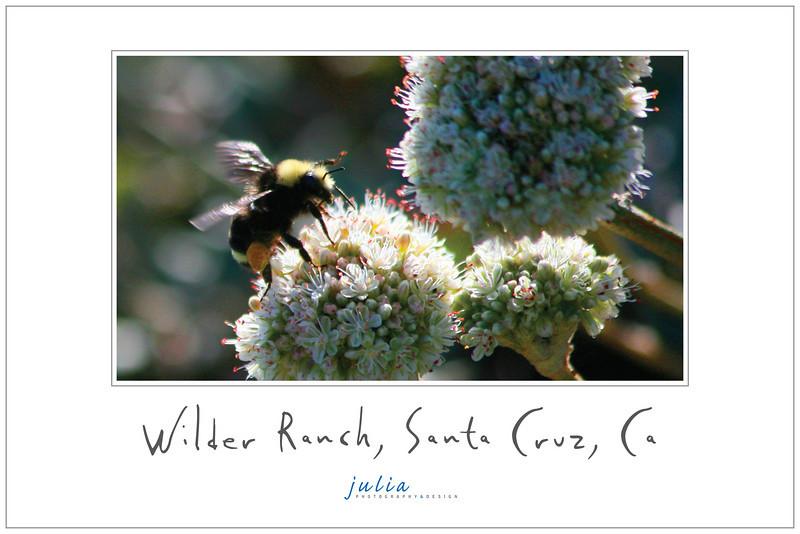 Poster 18x12<br /> Wilder Ranch, Santa Cruz, California. October 2008.<br /> Photography and design by Julia Held. Poster No.