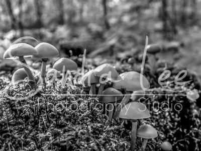 Mushroom Village-6