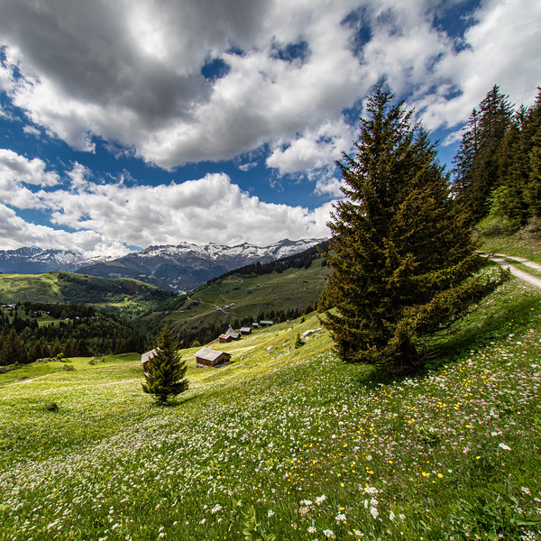 Alp oberhalb des Lukmaierpasses - Medel