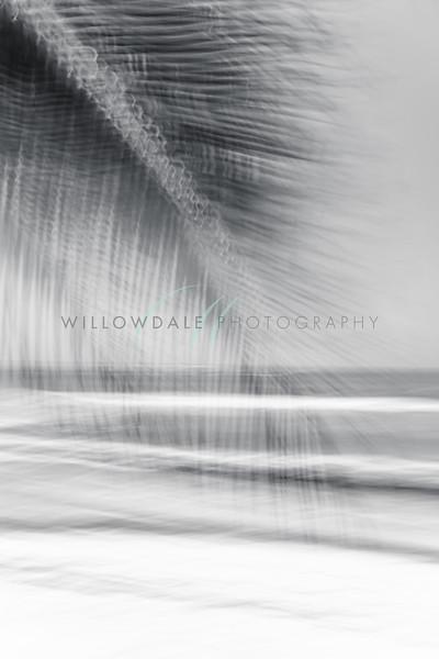 Windswept B&W